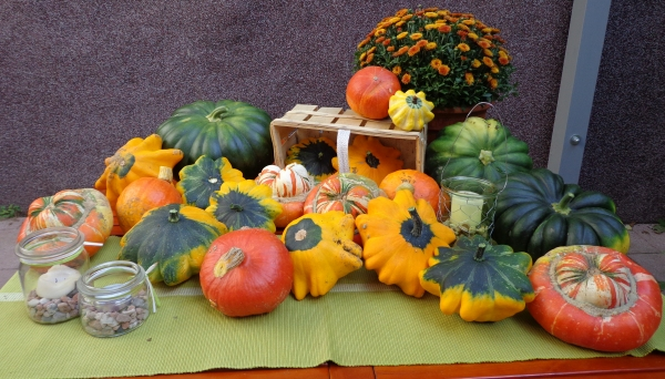 Herbstimpressionen aus Bauer Burkard's Garten