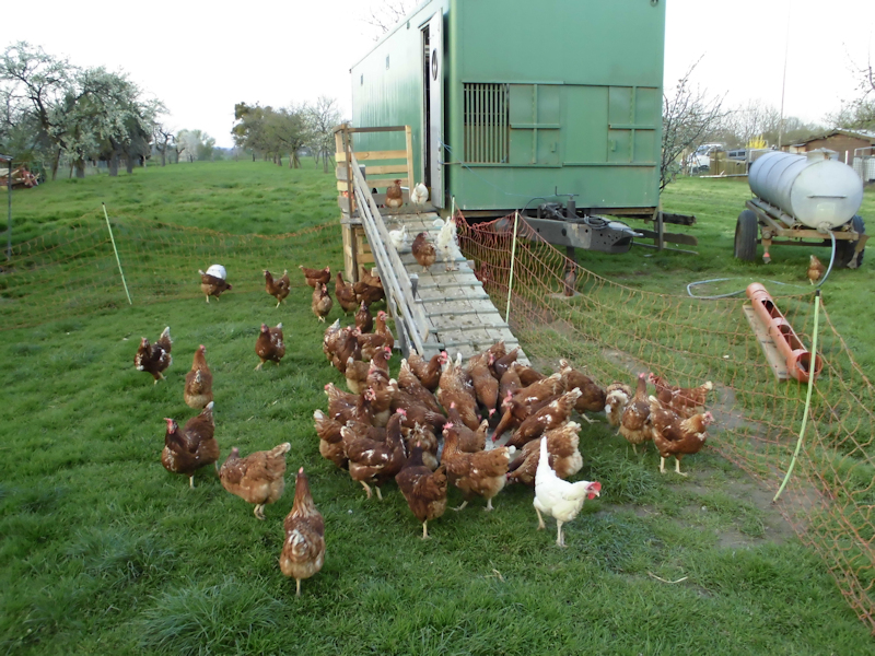 Das Hühnerhotel zum Schutz unserer freilaufenden Hühner