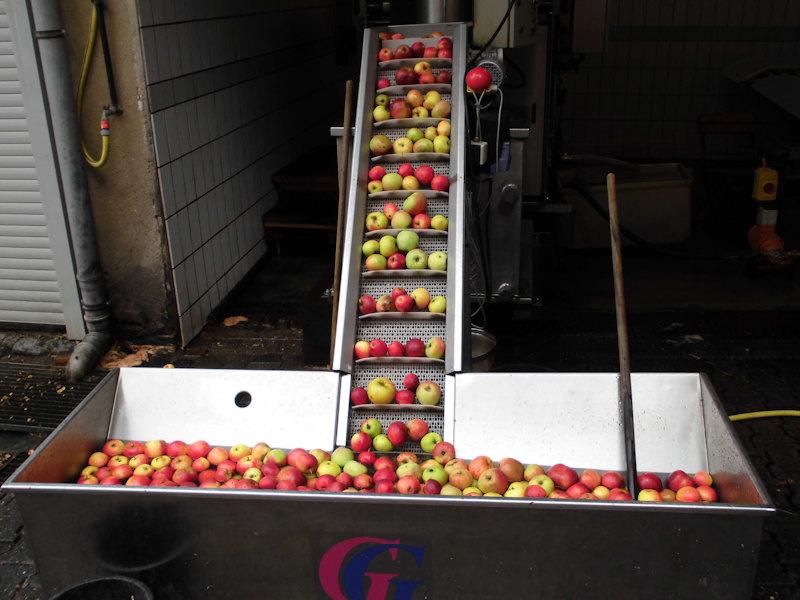 Ihre Äpfel werden gewaschen und in die Presse geladen