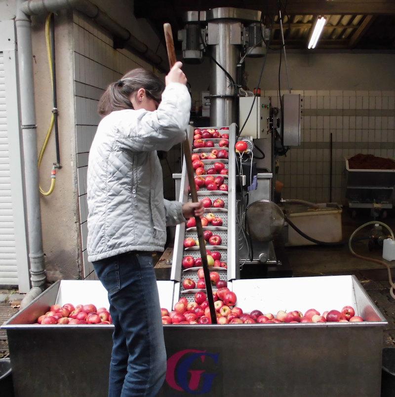 Handarbeit - Sie helfen mit beim Keltern Ihrer Ernte